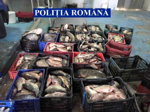 Polițiștii din Delta Dunării au confiscat peste 780 de kilograme de pește, în urma unei acțiuni pentru combaterea braconajului piscicol